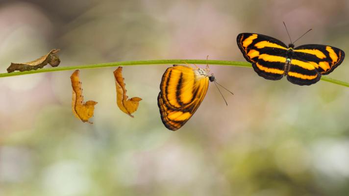 Fünf simple Schritte um Veränderungen umzusetzen